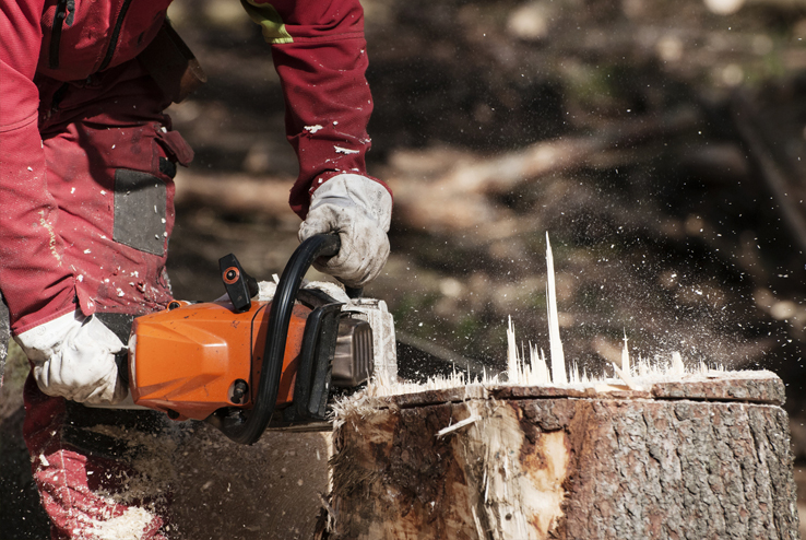Stump Grinding Maidstone