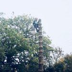 Tree Cutting in Tunbridge Wells