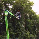 Tall Tree Cutting