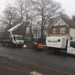 Tree Cutting Services in Maidstone