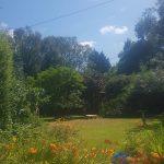 Lawn Maintenance Maidstone
