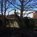 Garden Maintenance in Maidstone