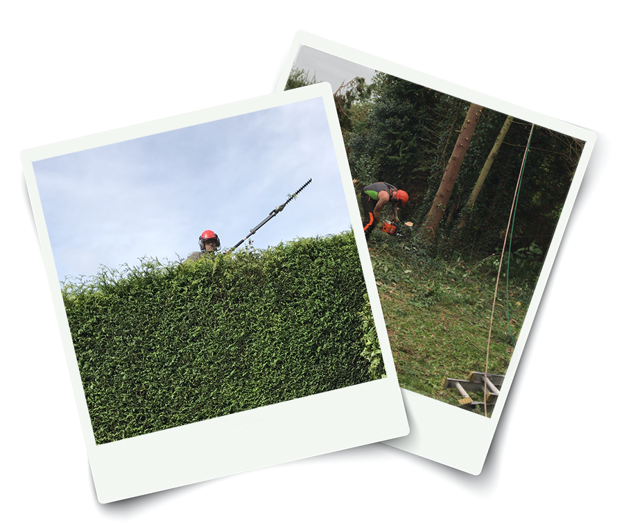 Tree Surgeon Tunbridge Wells